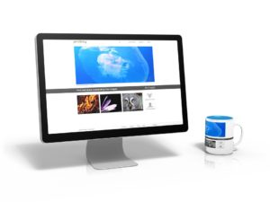 South Floirda Web Design